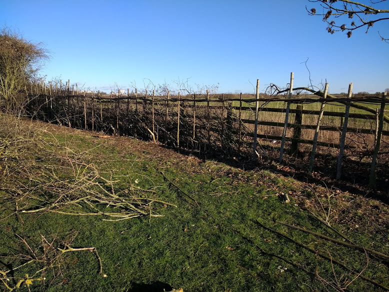 Smocker's Hedge Laying Event